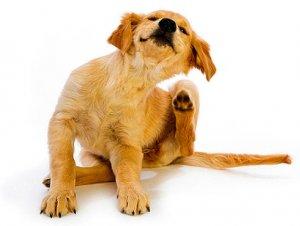Товары для собак тамбов